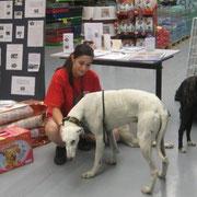 Palomino et une employée très attentionnée du maxi zoo