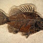 Poisson fossilisé. Sources: http://www.carionmineraux.com/mineraux_mars_13_p1.htm