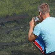 """Auf der """"Jagd"""" nach den Weissspitzen Riffhaien auf den Galápagos Inseln"""