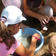 Balade Zoom rivière du Pays d'art et d'histoire : pêche aux petites bêtes de la rivière