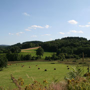 Paysage mêlant agriculture et sylviculture - Beaumont-du-Lac