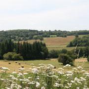 Randonnée-patrimoine : Saint-Denis-des-Murs (circuit  des Tupes) - Réservation obligatoire 05 55 69 57 60 - Samedi 8 août à 14h (4-5h / 13km) - TG