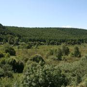 Plantations de résineux sur les hauteurs, pour exploitation sylvicole - Beaumont-du-Lac