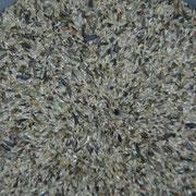 Miscela di semi per i cardellini major