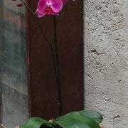Orquideas, macetas, fibra de coco.