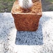 Maceta en fibra de coco con cactus.