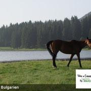 Unsere Reittour in Bulgarien führt durch Bergwiesen und kleine Seen, verschlafene Dörfer und sanfte Hügel