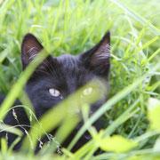 Lotte im Gras Hofkatze