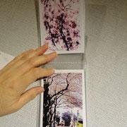 Aoto Natsuko「Sakura」写真