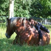 Griotte, cheval comtois