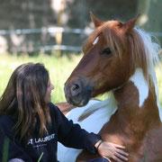 Nikon, un poney fier et émotif