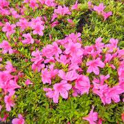 花壇にはスタッフが植える花が咲きます
