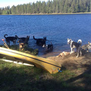Kanu  und Hunde im Sommer