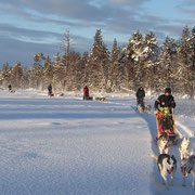 Huskytouren im Winter Wonderland