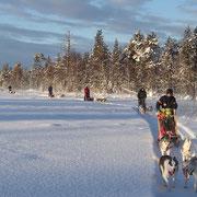 Huskytouren im Winter Wonderland