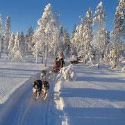 Hundeschlittenfahrten in Lappland