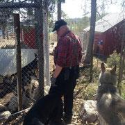 sista inspektionen av rastgården för hundarna