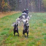 Unsere guten alten Alaskaner Holtan und Heinecken