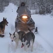 starke Hilfe  beim Ziehen  der  trails
