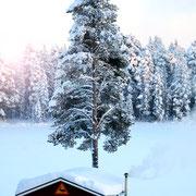 Lapplands Drag Huskyfarm