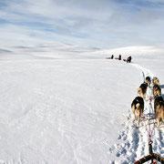 Hundeschlitten im Gebirge