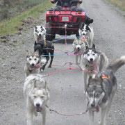 Lapplandtouren mit Huskys