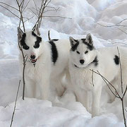 Lappland Dream Jack  och joik