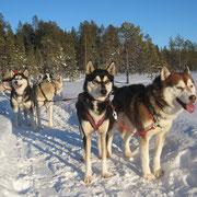 Leithunde Dynamit  und Yukon