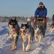Hundegespann  im Januar 2013