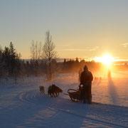 Huskyurlaub in Schweden