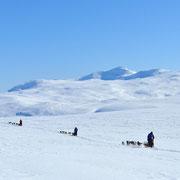 Erlben Sie die Weiten Lapplands
