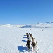 mit dem Hundegespann durch das Hochgebirge