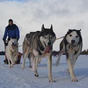 Huskys & Lappland Freude erleben