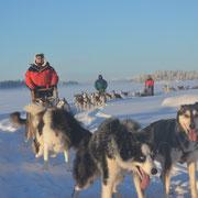 Winterurlaub miit Huskys