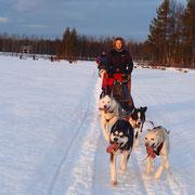 Hundeschlittentouren über Silvester