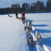 Siberian Husky Adventures