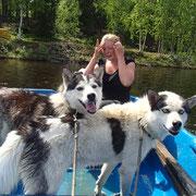 Siberian huskys Knox und natti mit Maike an Board