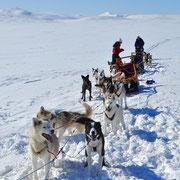 Hütte zu Hütte Touren mit Schlittenhunden