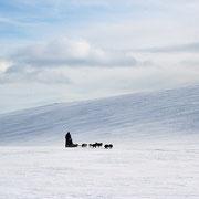 Hundegespann im Gebirge unterwegs