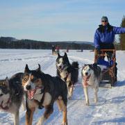 Unterwegs auf Huskytour durch Lappland...