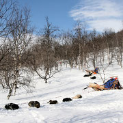 Sleddogtours in the  swedish mountains