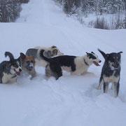 Freude  und  Spass  bei  den Junghunden