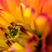 Farben des Sommers-19