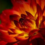 Farben des Sommers-8