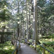Hemlock Grave Trail