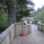 Der Beobachtungssteg am Fish Creek