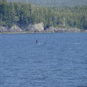 winkender Buckelwal (trotz Zoom leider etwas weit weg)