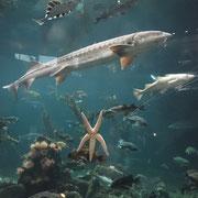 Underwater-Life im Vancouver Aquarium