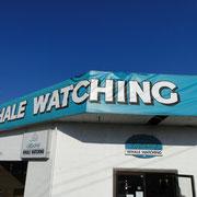Office von Mackay, Whale-Finder unseres Vertrauens
