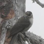 Lone some bird